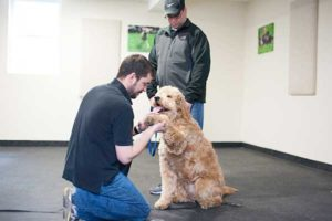 Dog Training Private Lessons