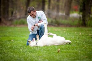 Dog training- Board and Train Program
